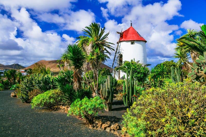 Campagna tradizionale dell'isola di Lanzarote Mulini a vento e cactu immagini stock libere da diritti