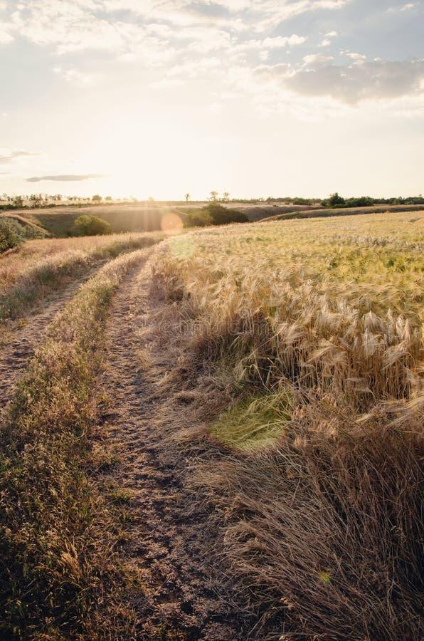 Campagne au coucher du soleil photographie stock libre de droits