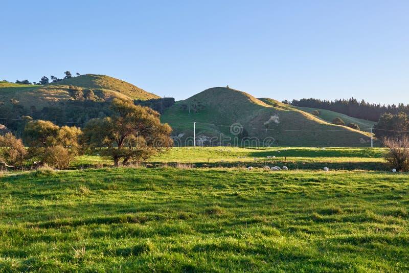 Campagne de la Nouvelle Zélande de roulement avec des prés et des pâturages photos libres de droits