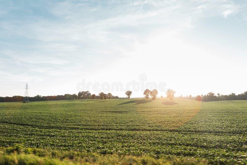 Campagne de paysage Pré vert et ciel bleu avec le soleil lumineux sur l'horizon photos stock