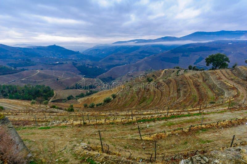 Campagne et vignobles dans la vallée de Douro photographie stock