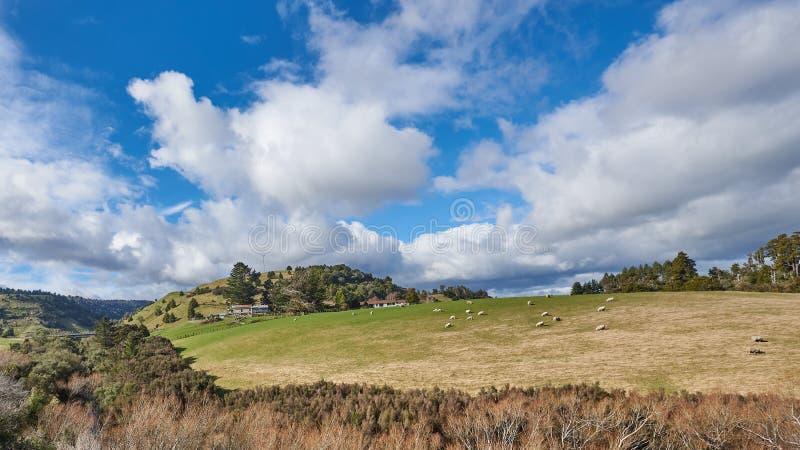 Campagne idyllique au Nouvelle-Zélande image libre de droits