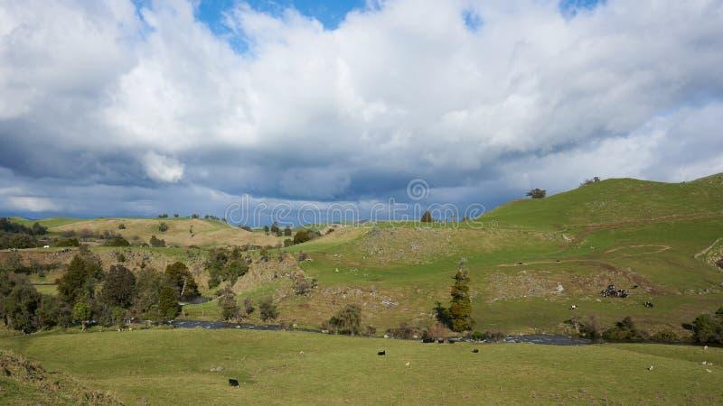Campagne idyllique au Nouvelle-Zélande photographie stock libre de droits