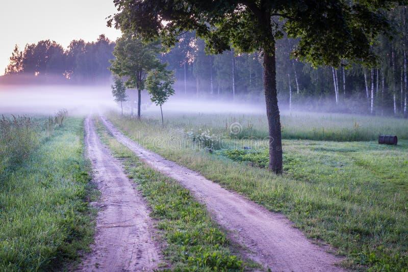 Campagne letton en brouillard photographie stock