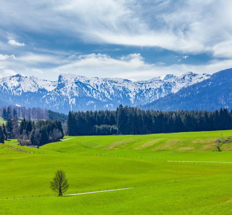 Campagne pastorale idyllique allemande au printemps avec des Alpes dans le backg photo libre de droits