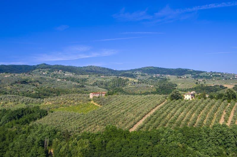Campagne toscane avec des vignobles, des oliviers, des bois, des fermes et la ville photo stock