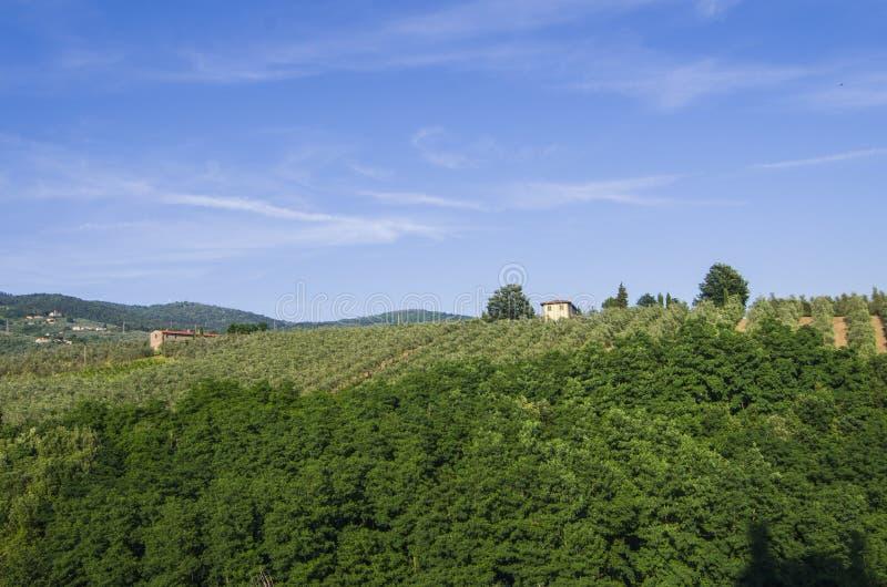 Campagne toscane avec des vignobles, des oliviers, des bois, des fermes et la ville image libre de droits