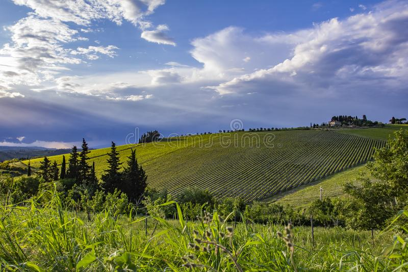 Campagne traditionnelle et paysages de la belle Toscane Vignes en Italie Vignes de la Toscane photographie stock