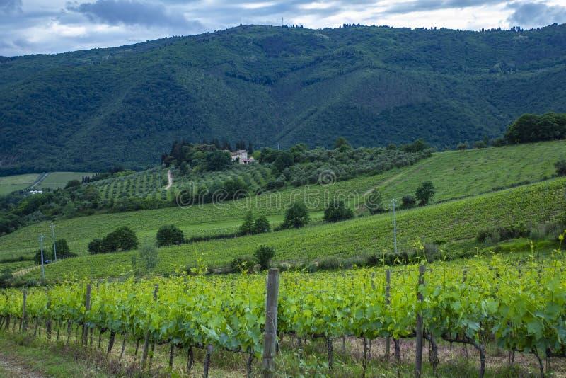 Campagne traditionnelle et paysages de la belle Toscane Vignes en Italie Vignobles de la Toscane, région de vin de chianti d'Ital photo libre de droits