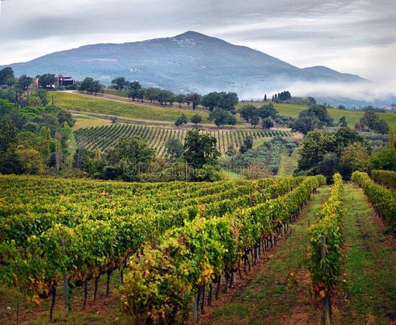 Campagne traditionnelle et paysages de la belle Toscane vin image stock