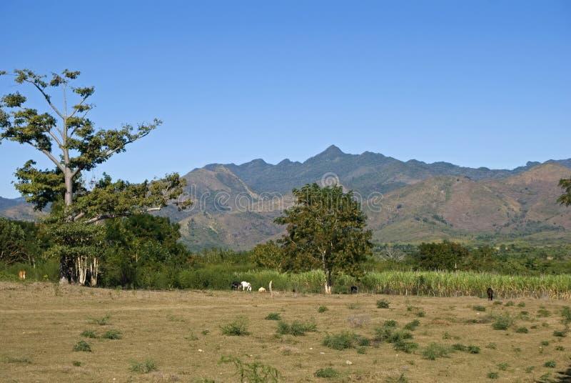 Campagne, vallée de l'Ingenios, Cuba photo stock
