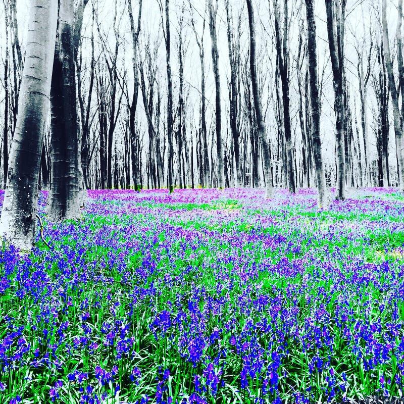 campainhas Winchester Hampshire das madeiras do micheldever fotos de stock royalty free