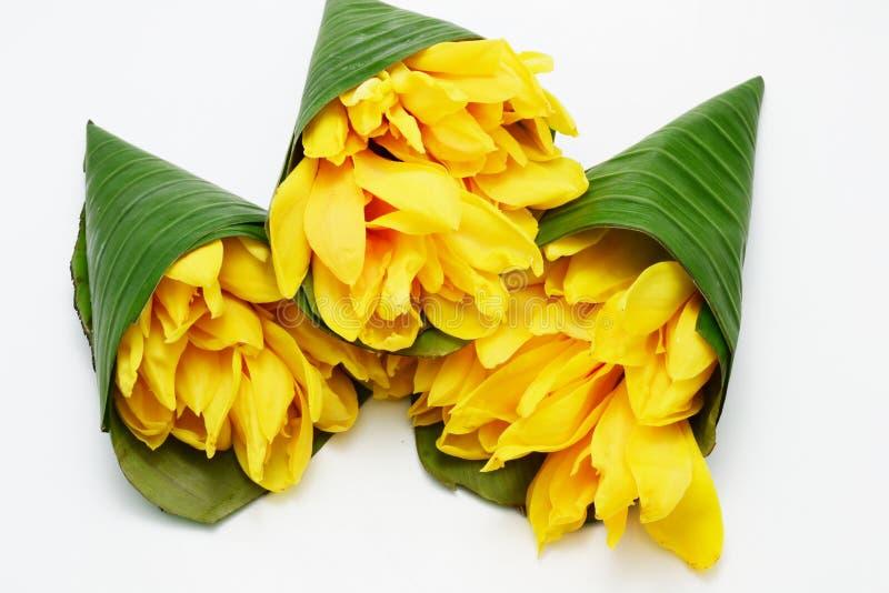 Campaka ylang ylang στοκ φωτογραφίες με δικαίωμα ελεύθερης χρήσης