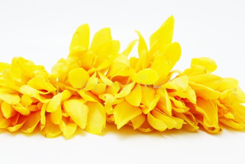 Campaka ylang ylang στοκ εικόνες με δικαίωμα ελεύθερης χρήσης