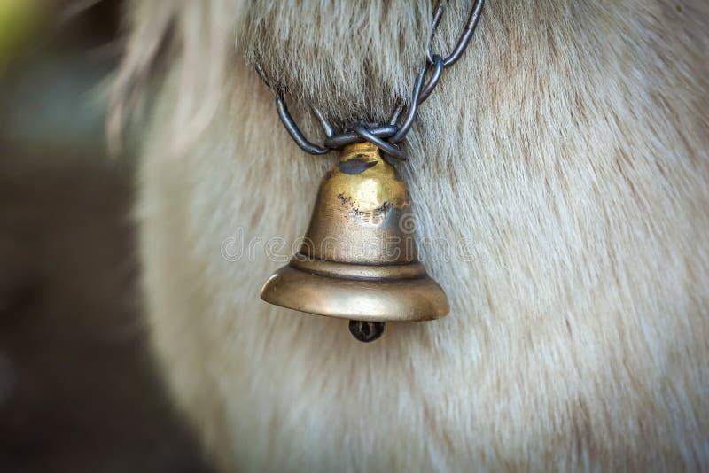 Campana-cuello de una cabra imágenes de archivo libres de regalías