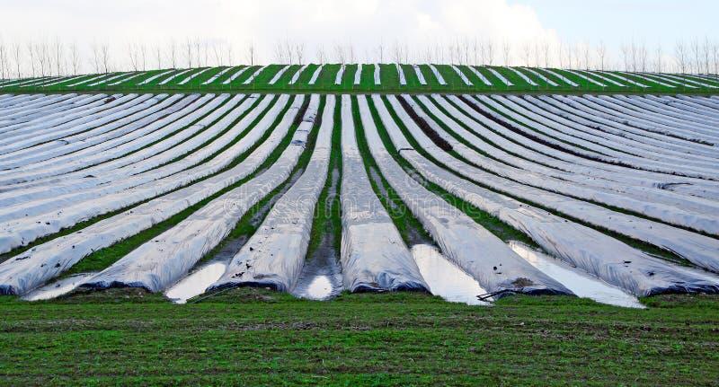 Campane di vetro di Polytunnels sull'azienda agricola immagine stock