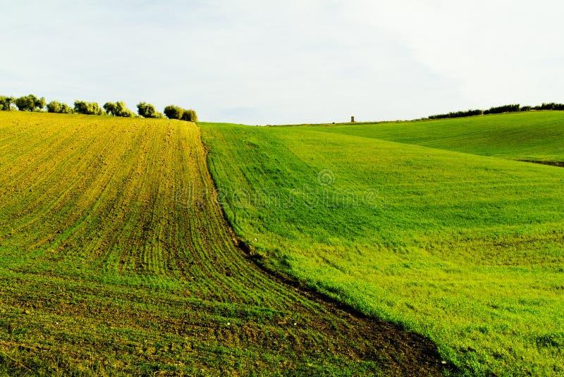 Campanha da sementeira do trigo foto de stock