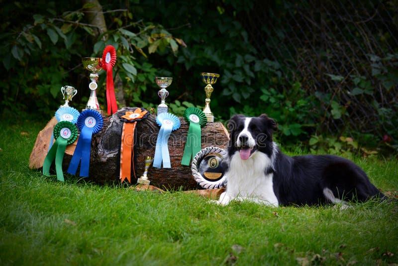 Campeón del perro imagen de archivo libre de regalías