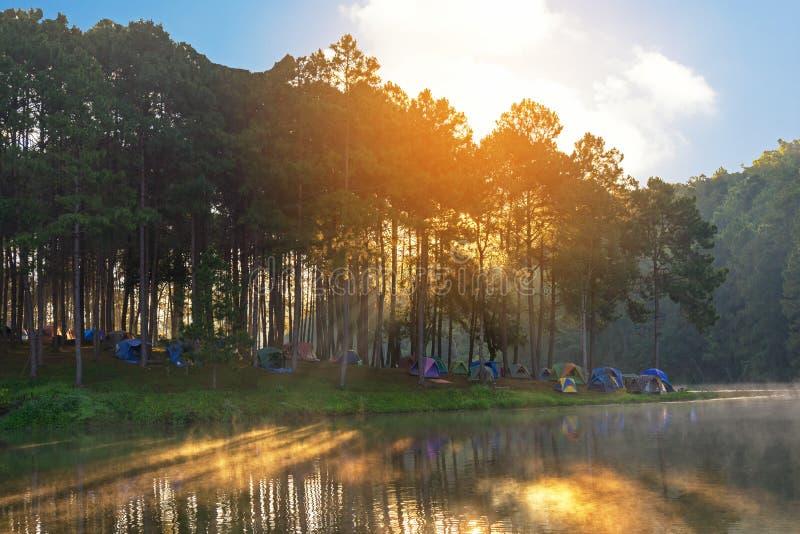 Campeggio e tenda di avventure sotto l'abetaia vicino ad acqua all'aperto nella mattina fotografie stock libere da diritti