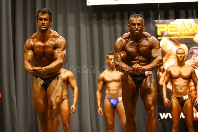 Campeonato do Bodybuilding fotos de stock royalty free