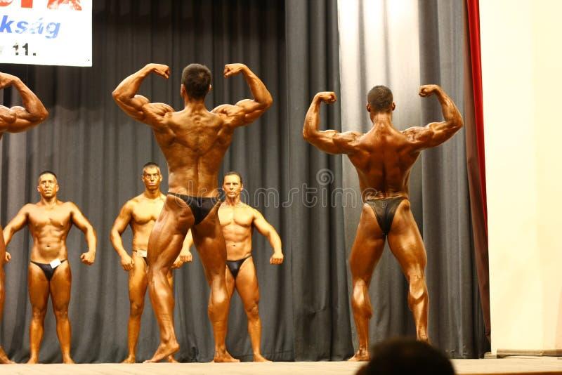 Campeonato do Bodybuilding imagem de stock