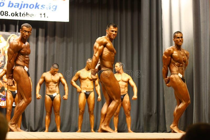 Campeonato do Bodybuilding fotografia de stock