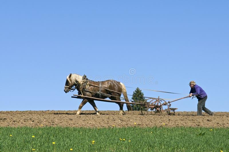 Campesino que ara con el caballo y la paleta, Alemania fotografía de archivo