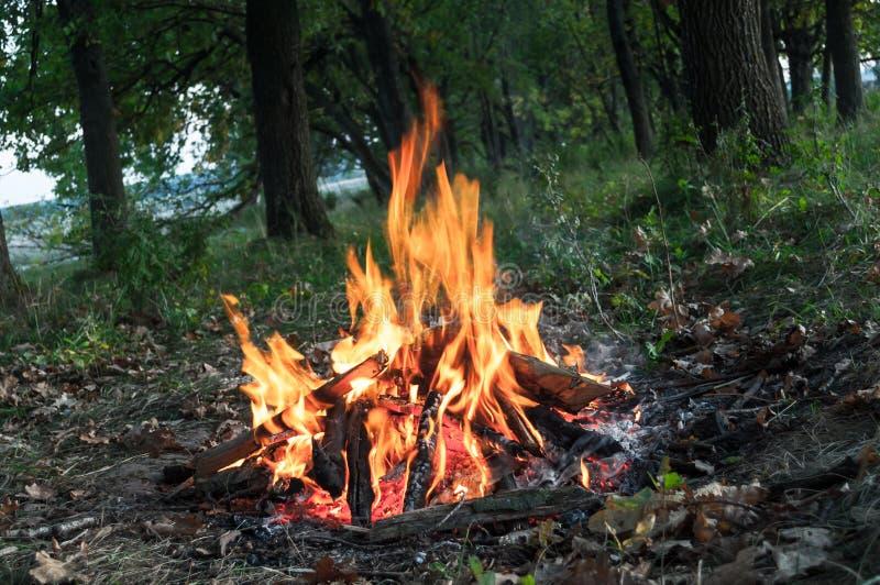 Campfire na natureza potência de fogo chamas devoradora de madeira potência de fogo incêndio imagem de stock