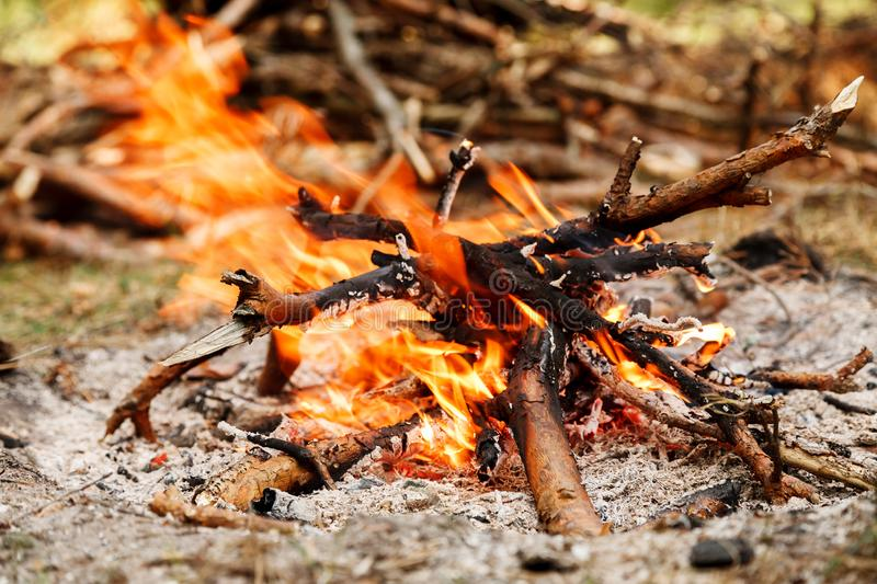 Campfire near pile of dry firewood in the forest stock image