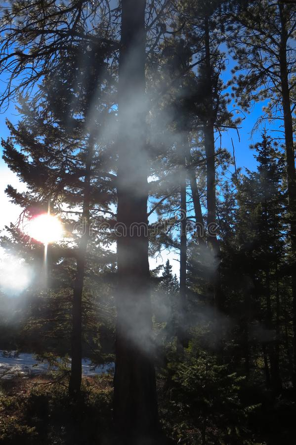 Campfire smoke in the trees stock image