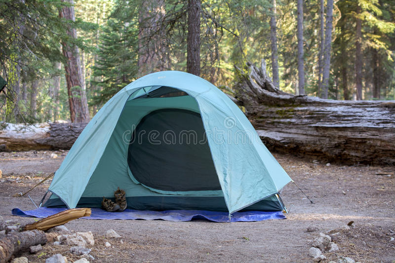 Campground green tent among pine trees. Selective focus on green tent in campground among pine trees at Lassen Volcanic National Park, California, USA, with a royalty free stock image