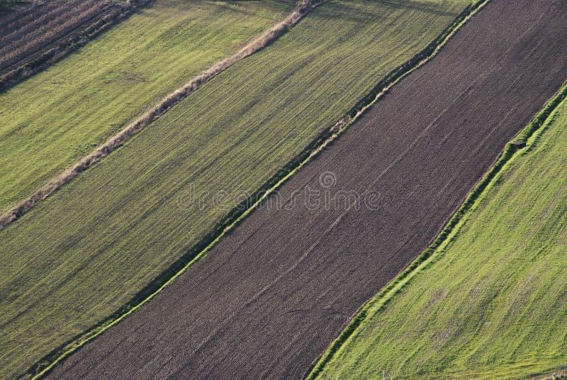Campi immagine stock immagine di paese terra tuscany - Immagine di terra a colori ...