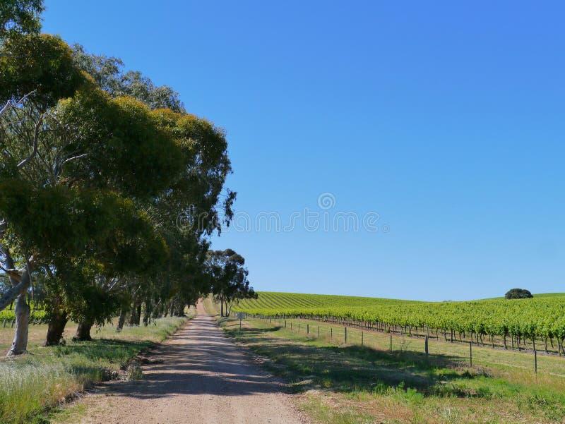 Campi agricoli australiani fotografia stock libera da diritti