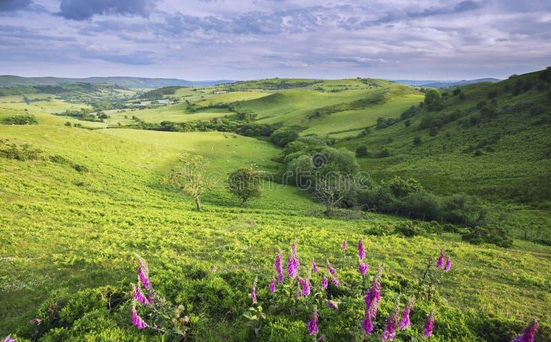Campi britannici di azienda agricola ad estate nello Shropshire immagine stock libera da diritti