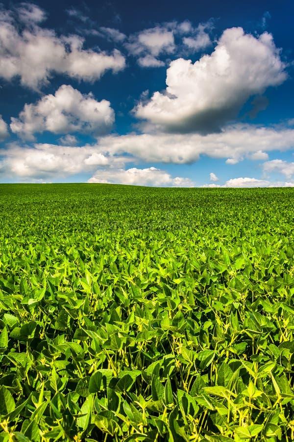 Campi della soia, nella contea di Baltimore rurale, Maryland fotografia stock
