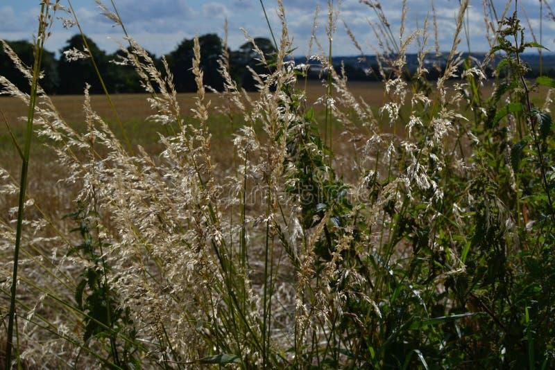 Campi di autunno, passeggiata soleggiata del aaftternoon fotografia stock libera da diritti
