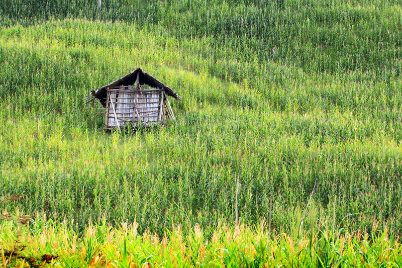 Campi di cereale fotografia stock libera da diritti