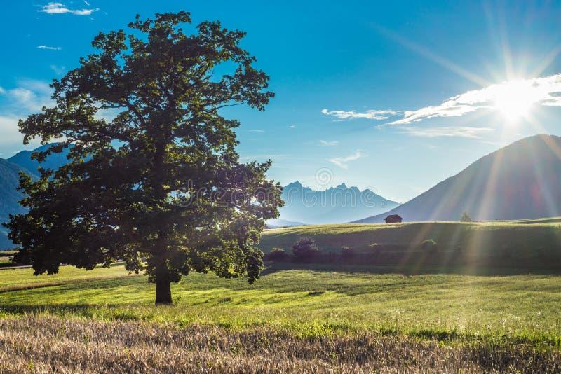 Download Campi Di Fietch Su Sonnenplateau, Austria Fotografia Stock - Immagine di festa, austriaco: 55353304