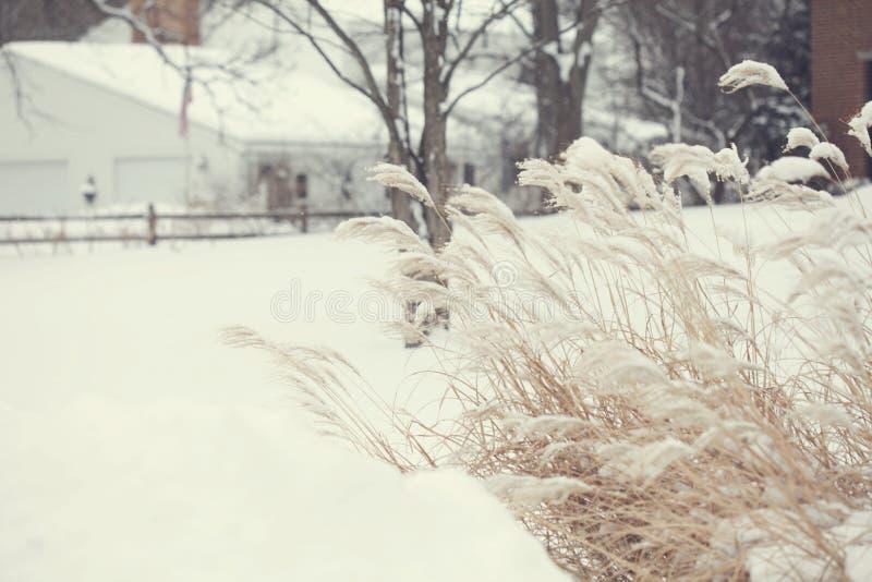 Campi di inverno di neve fotografia stock libera da diritti