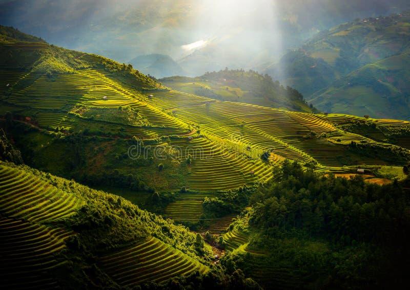 Campi di riso in terrazza con padiglione di legno all'alba a Mu Cang Chai, YenBai, Vietnam immagini stock libere da diritti