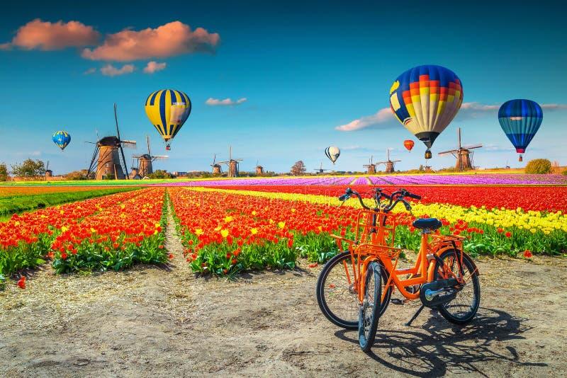 Campi di tulipano colorati, biciclette, mulini a vento e palloni per l'aria calda, Paesi Bassi fotografia stock libera da diritti