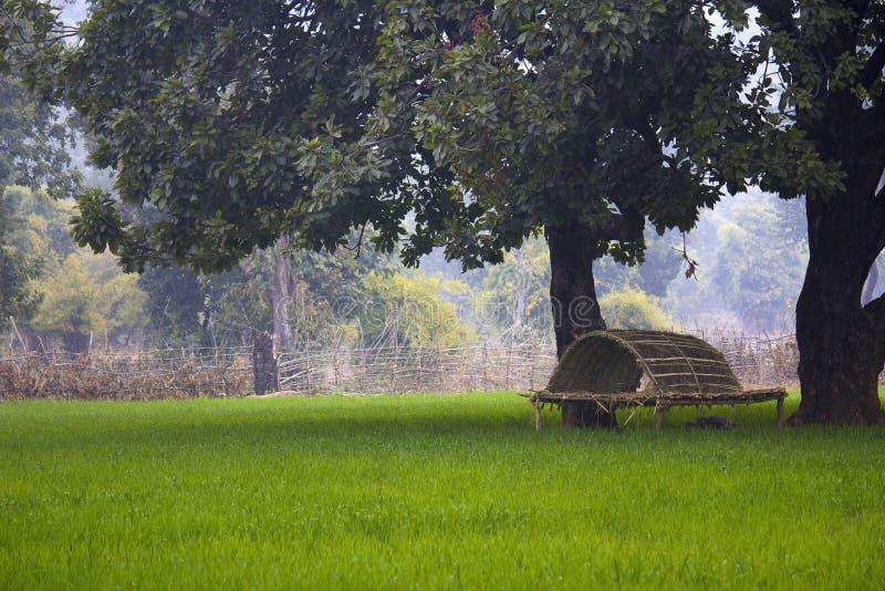 Campi e bandhavgarh vicino machan, periferie di Bandhavgarh Tiger Reserve, Madhya Pradesh fotografie stock libere da diritti