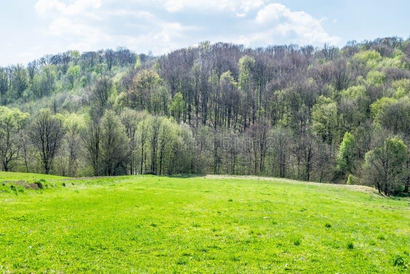 Campi e foreste d'inverdimento ad aprile immagine stock
