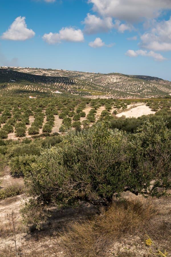 Campi e montagne, Creta, Grecia immagine stock libera da diritti