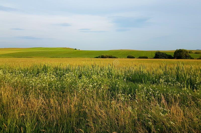 Campi gialli di erba con cielo blu e le montagne nel fondo Piccoli alberi, ora legale fotografie stock libere da diritti