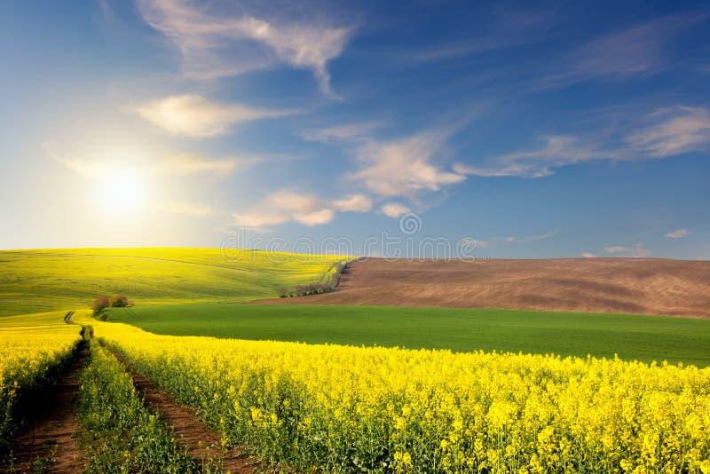 Campi gialli, verdi, marroni e strada a terra che trascurano una valle immagini stock libere da diritti