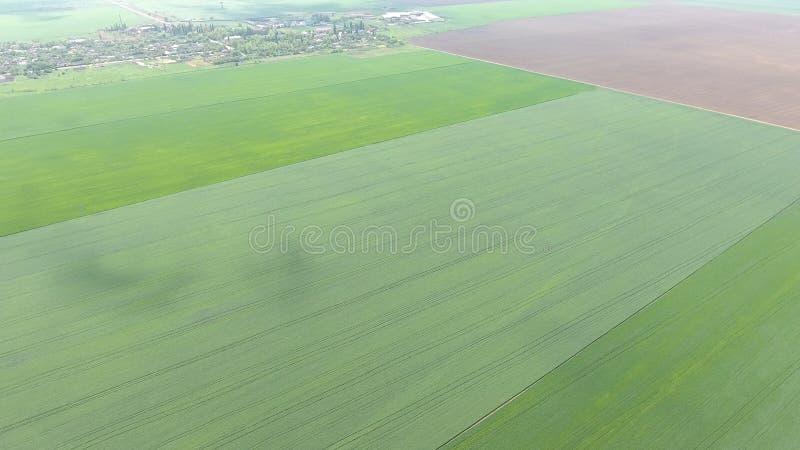 Campi nella vista di Kuban da un'altezza Giovane grano e campo arato un poco più ulteriormente dal villaggio immagine stock