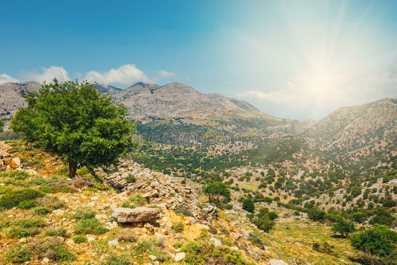 Campi verde oliva sull'isola di Creta in Grecia immagine stock libera da diritti