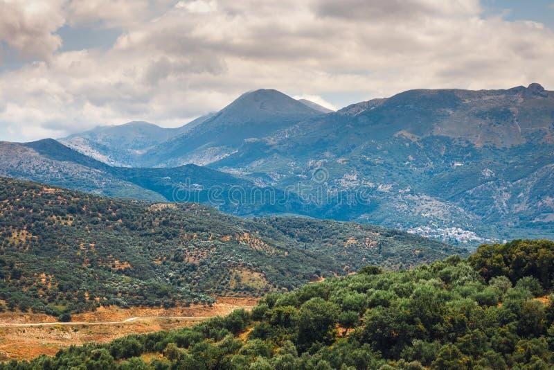 Campi verde oliva sull'isola di Creta in Grecia fotografia stock