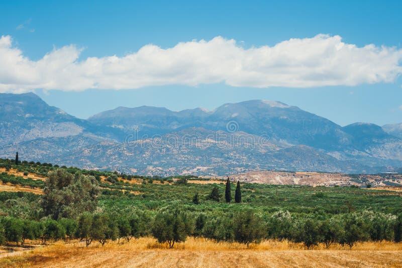 Campi verde oliva sull'isola di Creta in Grecia fotografia stock libera da diritti
